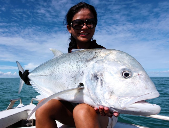 A G.T ( Golden Trevally )
